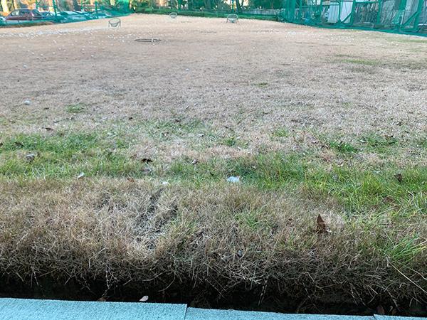 白糸台ゴルフセンターの天然芝