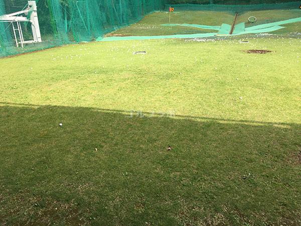 南中野ゴルフセンターの天然芝